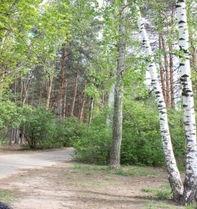 Парк Естественная природа